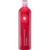 Бессиликоновый шампунь с маслом камелии Innisfree Camellia Essential Shampoo