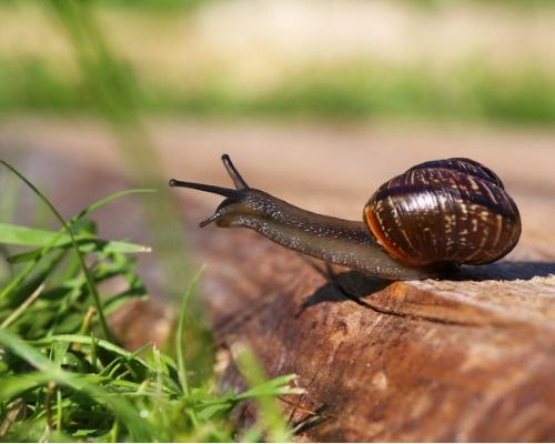 Mizon Snail Repair